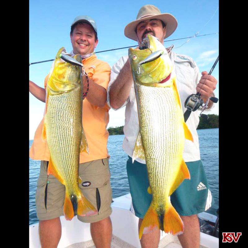 O pescador Fabiano e seu amigo pegaram os dois dourados com a isca Tontinha.